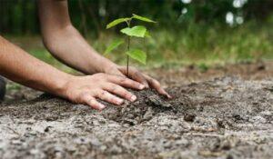 reconstructie ecologica